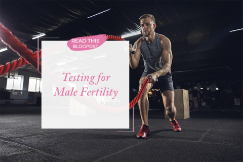 Testing for Male Fertility
